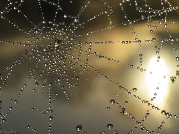 Morning Dew on web Every droplet is a lens